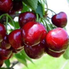 Datenbank für gesundes Obst und Gemüse